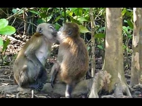KISSING MONKEYS! - YouTube
