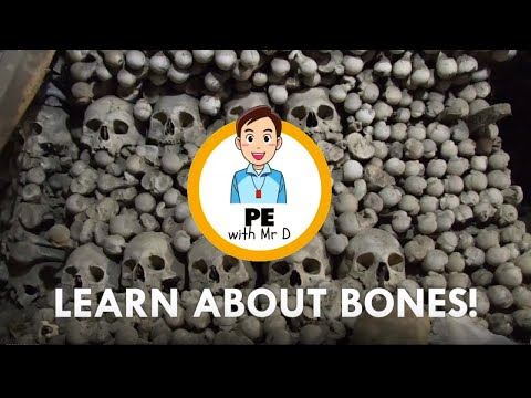 Learn about Bones! Structure, types and how they form your skeleton