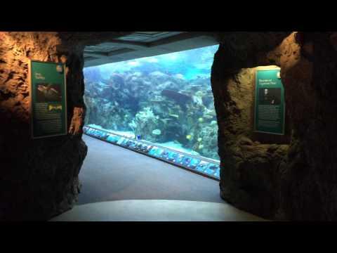Aquarium of Pacific 025 Tropical Pacific 23 April 2015
