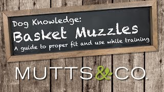Dog Knowledge: Basket Muzzles, a guide to proper fit and use while training