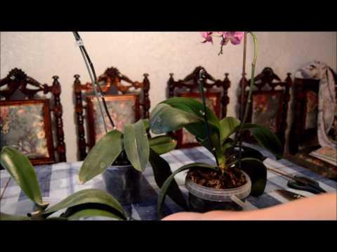 Как правельно обрезать орхидею после цветения