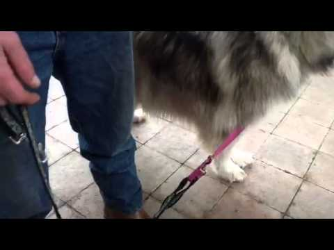 Behavioural advice for jumping dogs