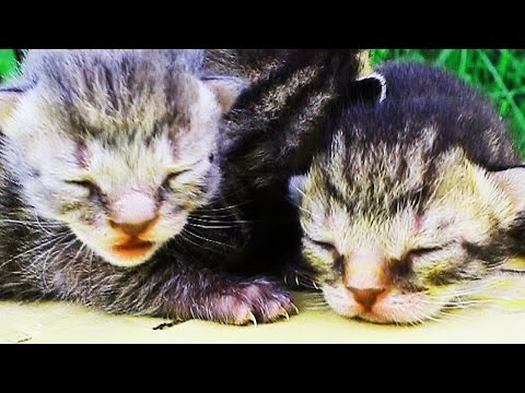 Who Cried? Cute Fluffy Baby Kittens!!!