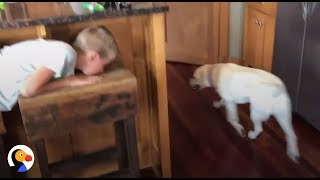 Smart Dog Plays Hide and Seek With Human Brother | The Dodo