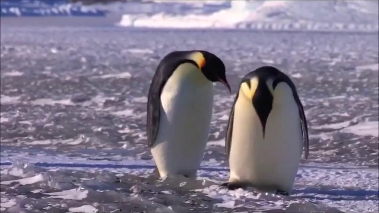 Pinguine Lustig
