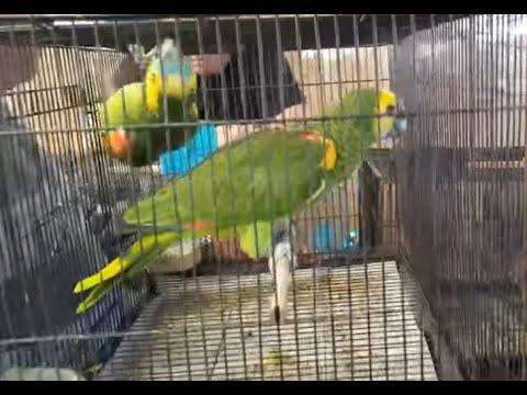 Bird Sales Event - Market In Sydney Australia(2)