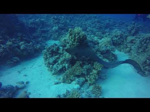 Red Sea reefs