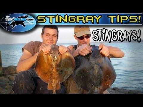 Stingray Fishing Tips | TAFishing