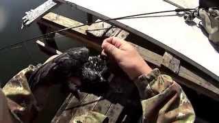 Рыбалка.Ловил щуку,а поймал голубя.