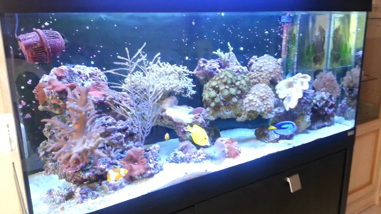 Fluval roma 240 aquarium fish tank - Karlosmalaga Fluval Reef