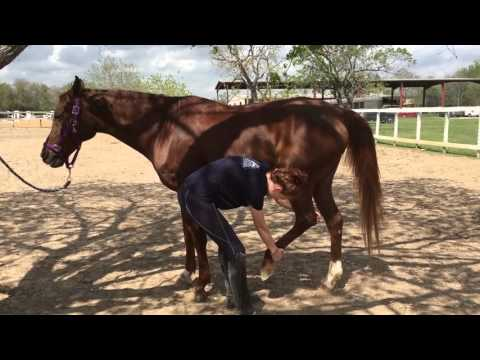 Everyday Stretch for Your Horse