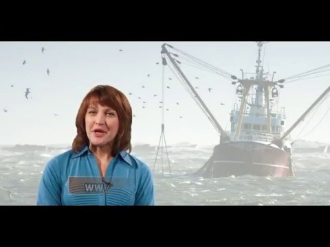 krill-oil-reviews---how-to-choose-the-best-krill-oil