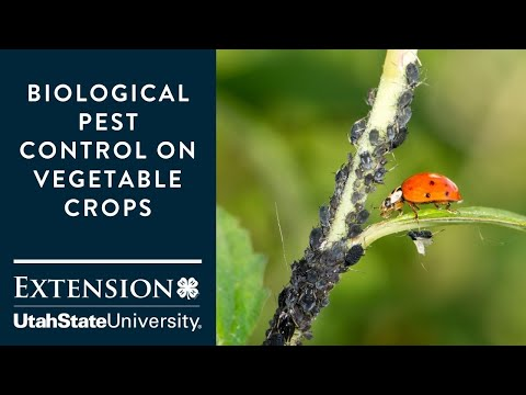 Biological Pest Control on Vegetable Crops
