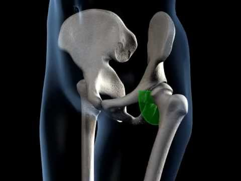 Hip Joint Range of Movement - 3D Medical Animation || ABP ©