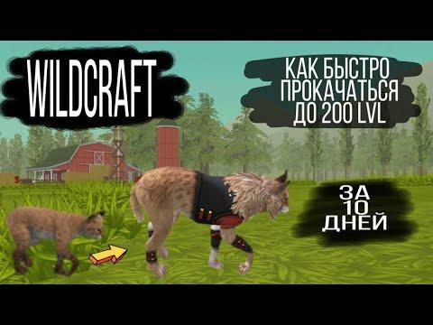 WildCraft/Как быстро прокачаться до 200 уровня за 10 дней/How To Quickly Upgrade To Level 200