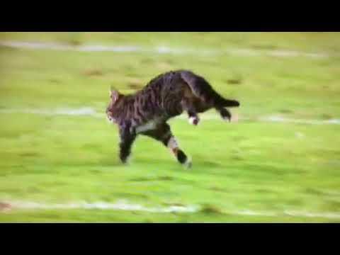.cat file