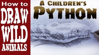 How to Draw a Snake (intermediate) Children