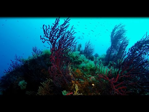 Scuba Diving - Port Cros - Porquerolles - Marseille - France - GoPro Hero4 Black 4K UHD