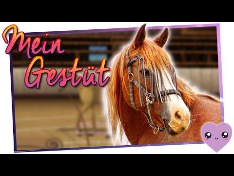 Fohlen züchten ♥ Mein Gestüt - Ein Leben für die Pferde »19« ♥ [Let's Play][Deutsch] von YouTube · Dauer:  18 Minuten 10 Sekunden