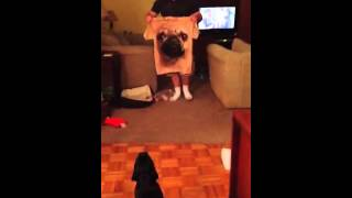Pug Tshirt Freak Out