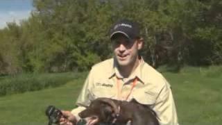Pheasant Forever Tv Training Tips 01