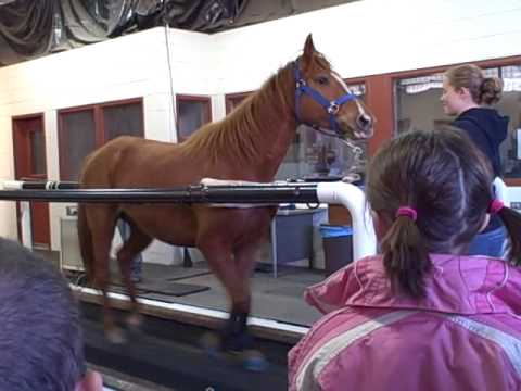 Horse Treadmill.
