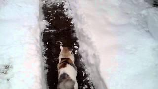 Кот и зима