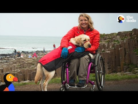 Service Dog Inspires Woman To Live Life To The Fullest Despite Her Injuries   The Dodo