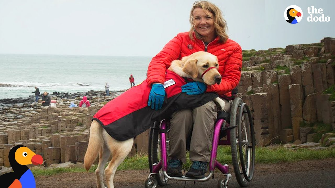 Service Dog Inspires Injured Woman To Live Life To The Fullest   The Dodo