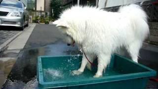 夏といったらプラ舟!! 水との格闘&ホリホリは、フォルテの得意技さっ.