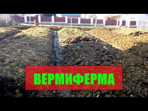 В гостях на вермеферме, где разведение червей старатель, удобрение биогумус.