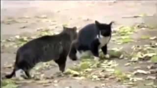 Показать видео про животных