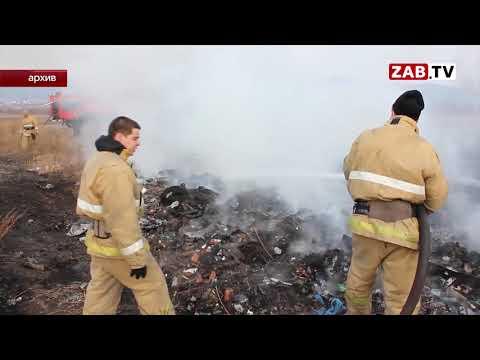 На пожаре в Борзе погибли 240 голов крупного рогатого скота