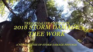 2018 Tree Work Storm Damage Footage (Hurricane Winds)