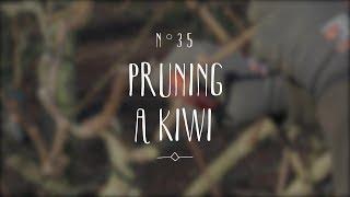 How to prune a kİwi plant