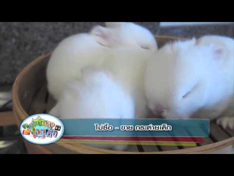 ครอบครัวข่าวเด็ก ตอน ไม่ซื้อ - ขาย กระต่ายเด็ก (2มี.ค.58)