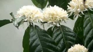 athmavin pusthaka thalil-chitra