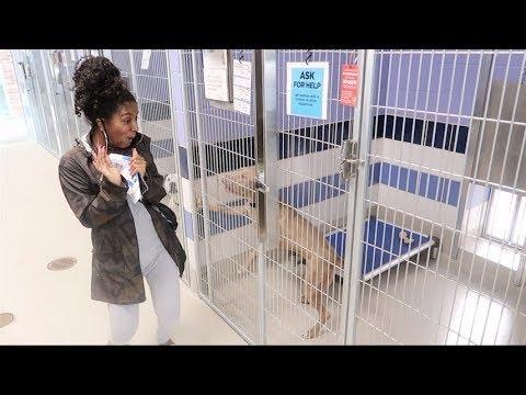 BOYFRIEND BRINGS ME TO ANIMAL ADOPTION CENTER!