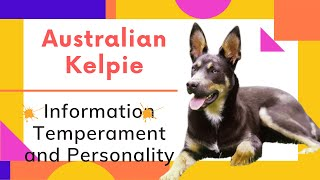 dogs: Australian Kelpie Breed Information And Personality
