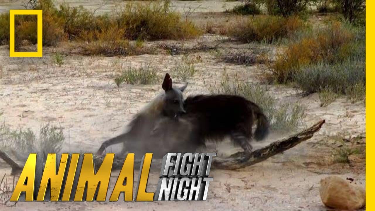 Watch Animal Fight Night Online | Stream Full Episodes ...