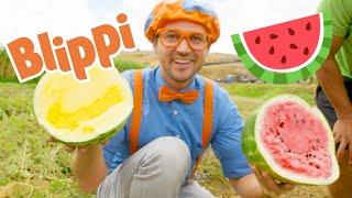 🔴 Learn With Blippi | Brand New Blippi Full Episodes 2020 | Educational Videos For Kids