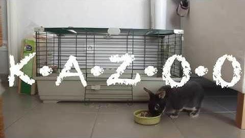 EXPLORATION - Kazoo Vlog 02