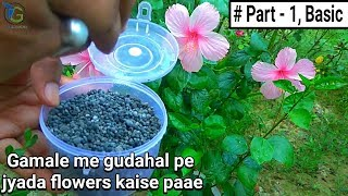 How to get more flowers in hibiscus in pot :: basic Tips & Care in hindi