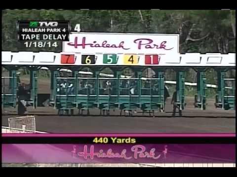 Hialeah Park Horse makes HUGE jump at the finish line - Saturday January 18, 2014