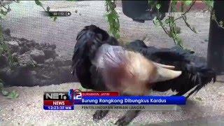 Burung Rangkong Dibungkus Kardus Penyeludupan Hewan Langka - NET12