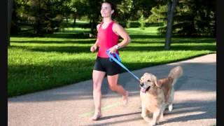 Dog Training Long Island