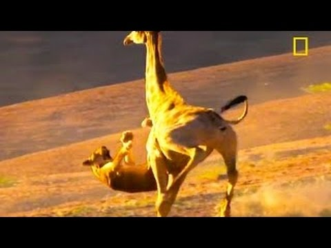 National Geographic Documentary 2016 How to Survive in the Forest    Travel Documentary 20