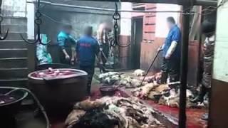 Worst animal cruelty in china