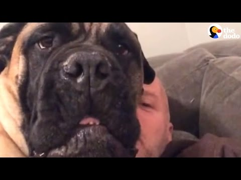 Dog Can't Stand His Dad Singing Christmas Song