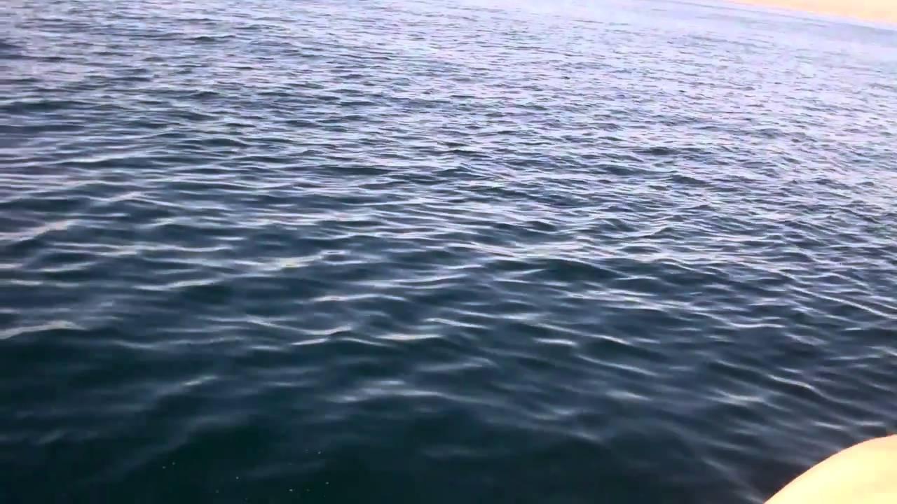 Dana point shark fishing youtube for Fish count dana point